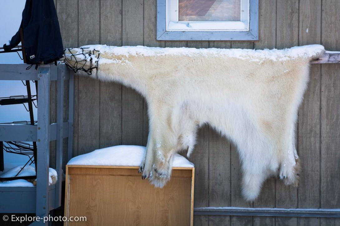 peau d'ours qui seche